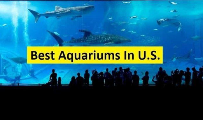 best aquarium in us