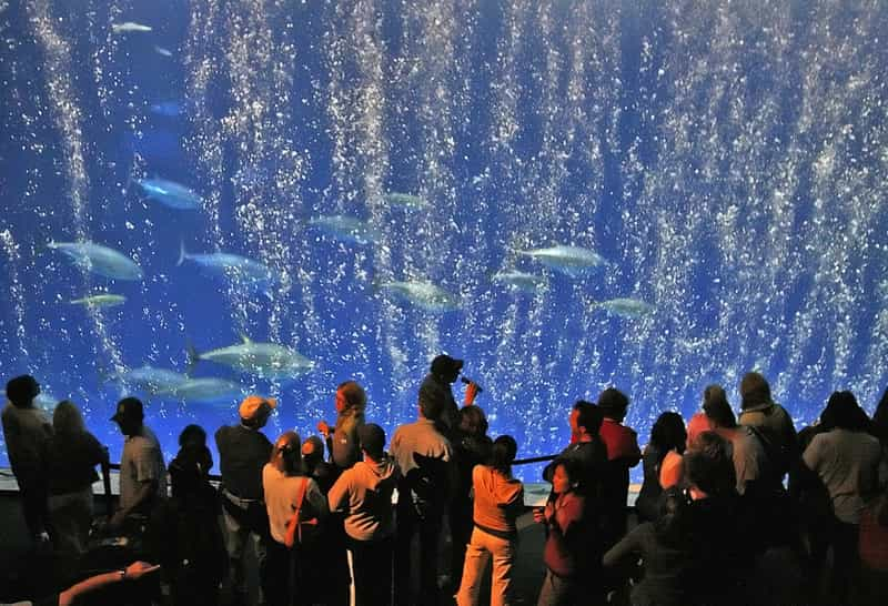 best aquarium in the us