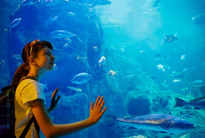 what are the best aquariums in the us